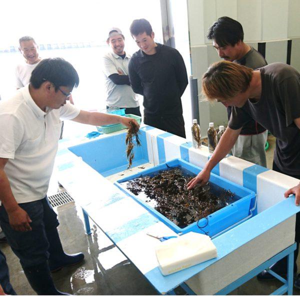 由比周辺の海洋環境と生物生産に係る可能性調査