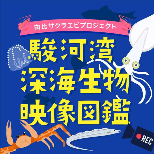 駿河湾深海生物映像図鑑